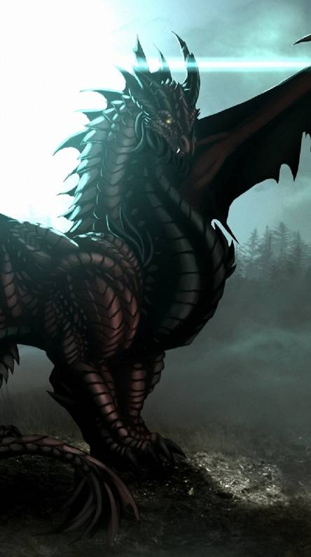 Dragon Of Black