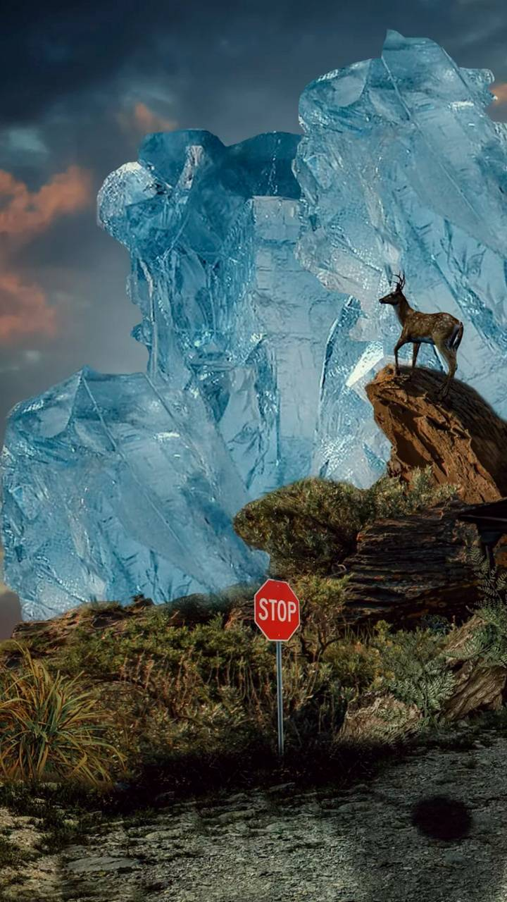 Deer on the rocks