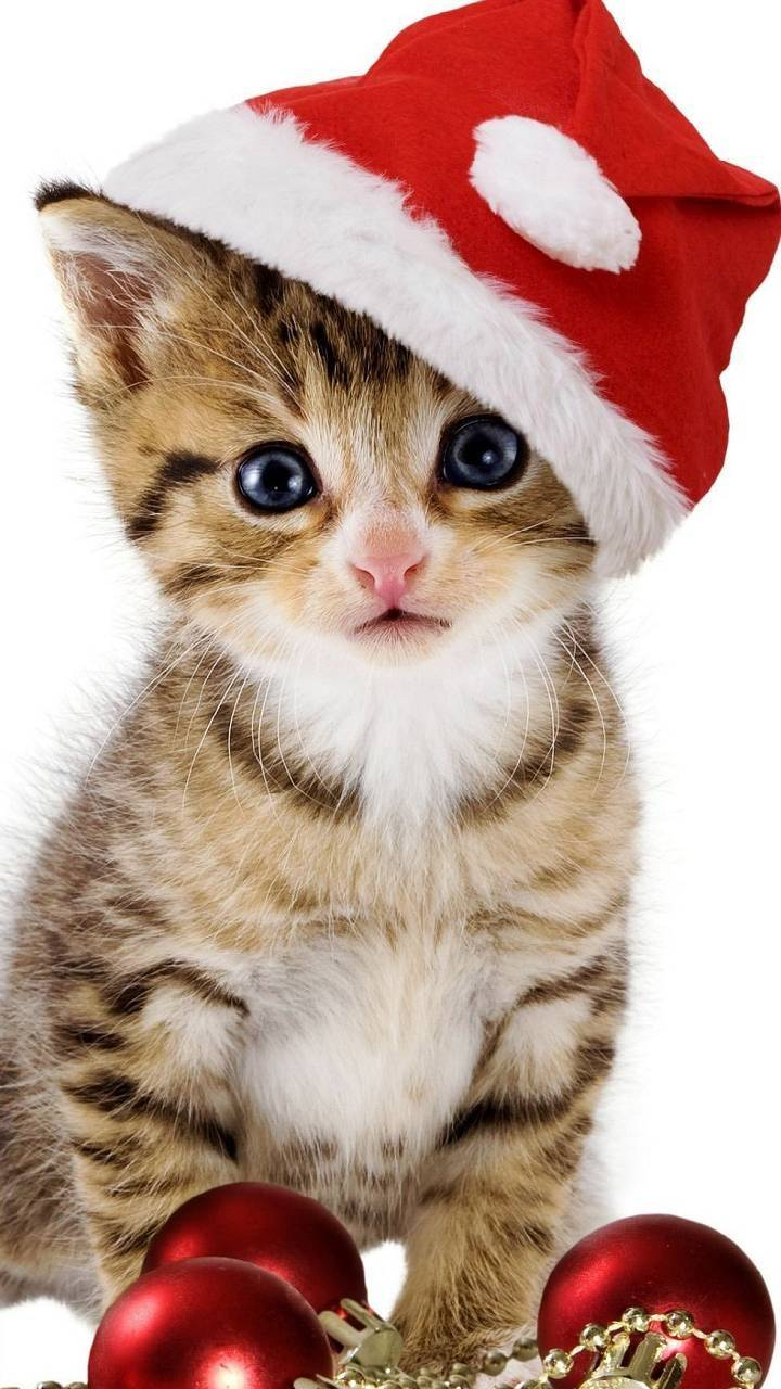 Christmas Cat Wallpaper By Skeleta999 2d Free On Zedge
