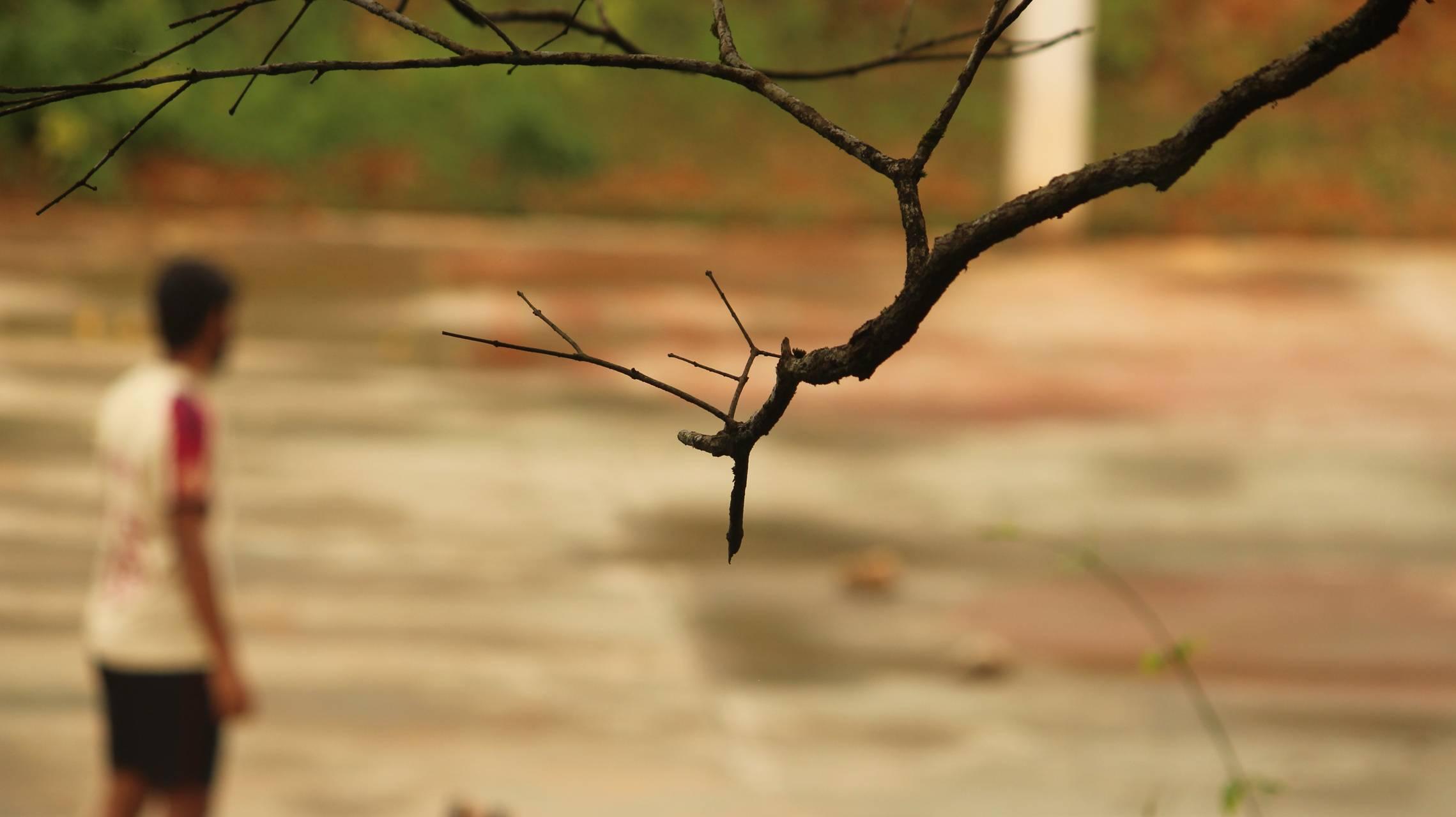 Leafless branchs