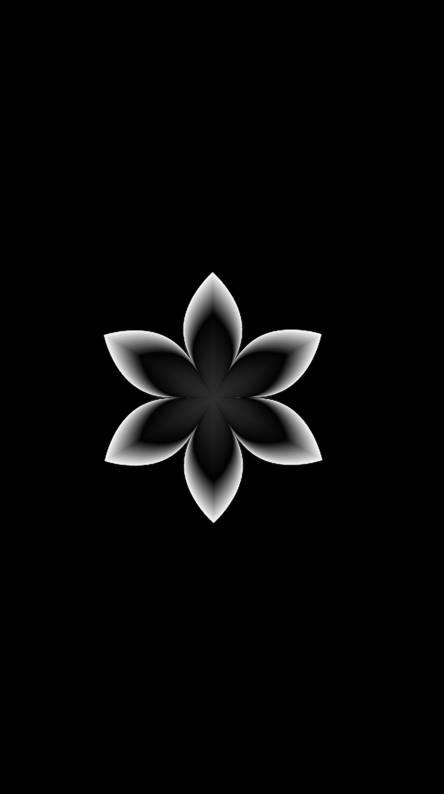 1 Black Flower