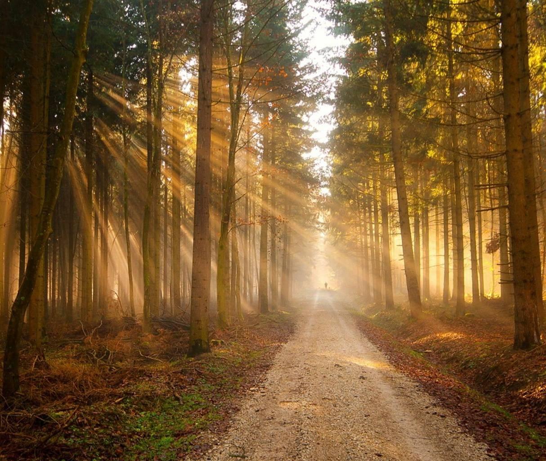 Forest Light Hd