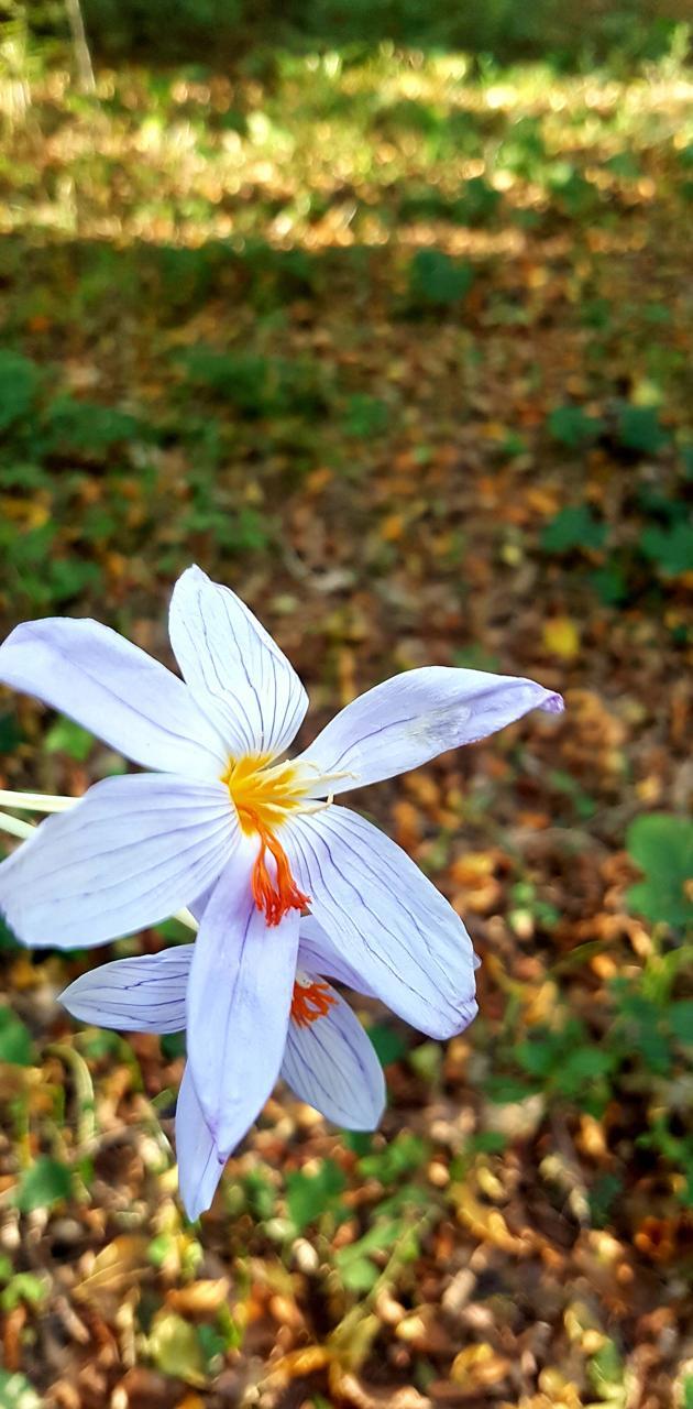 Istanbul flowers