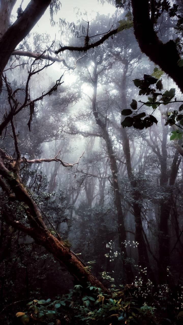Jungle fog