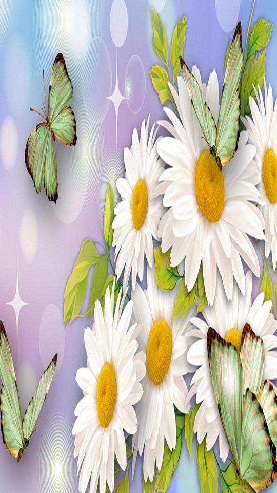 Butterflies daisies