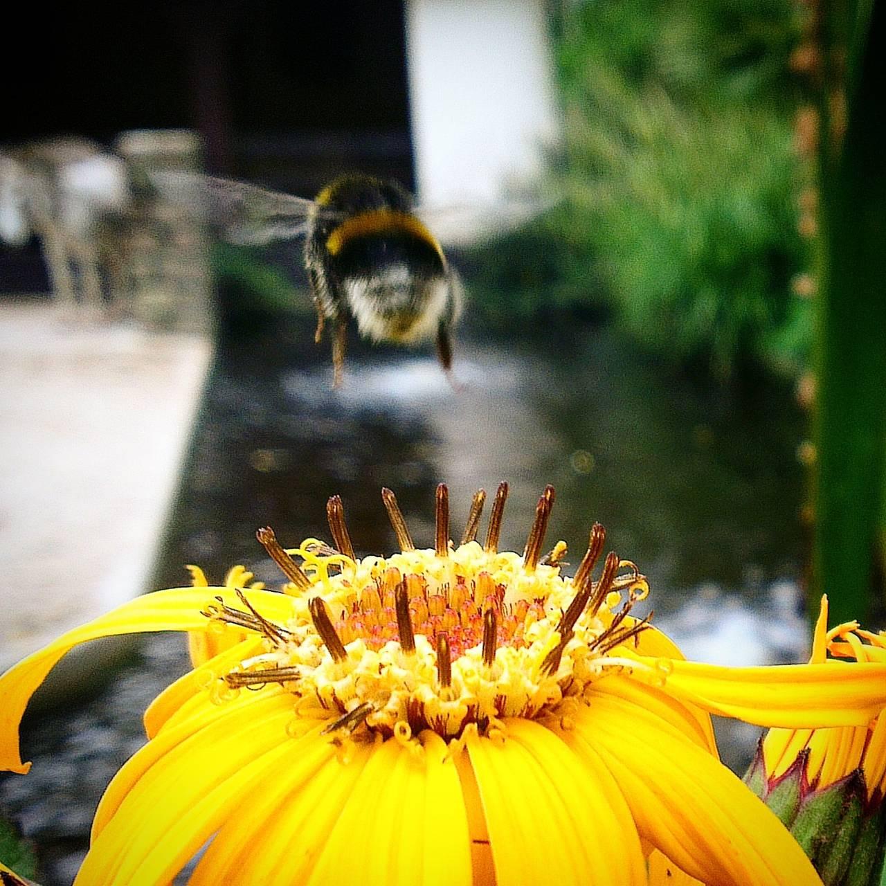 Bee super