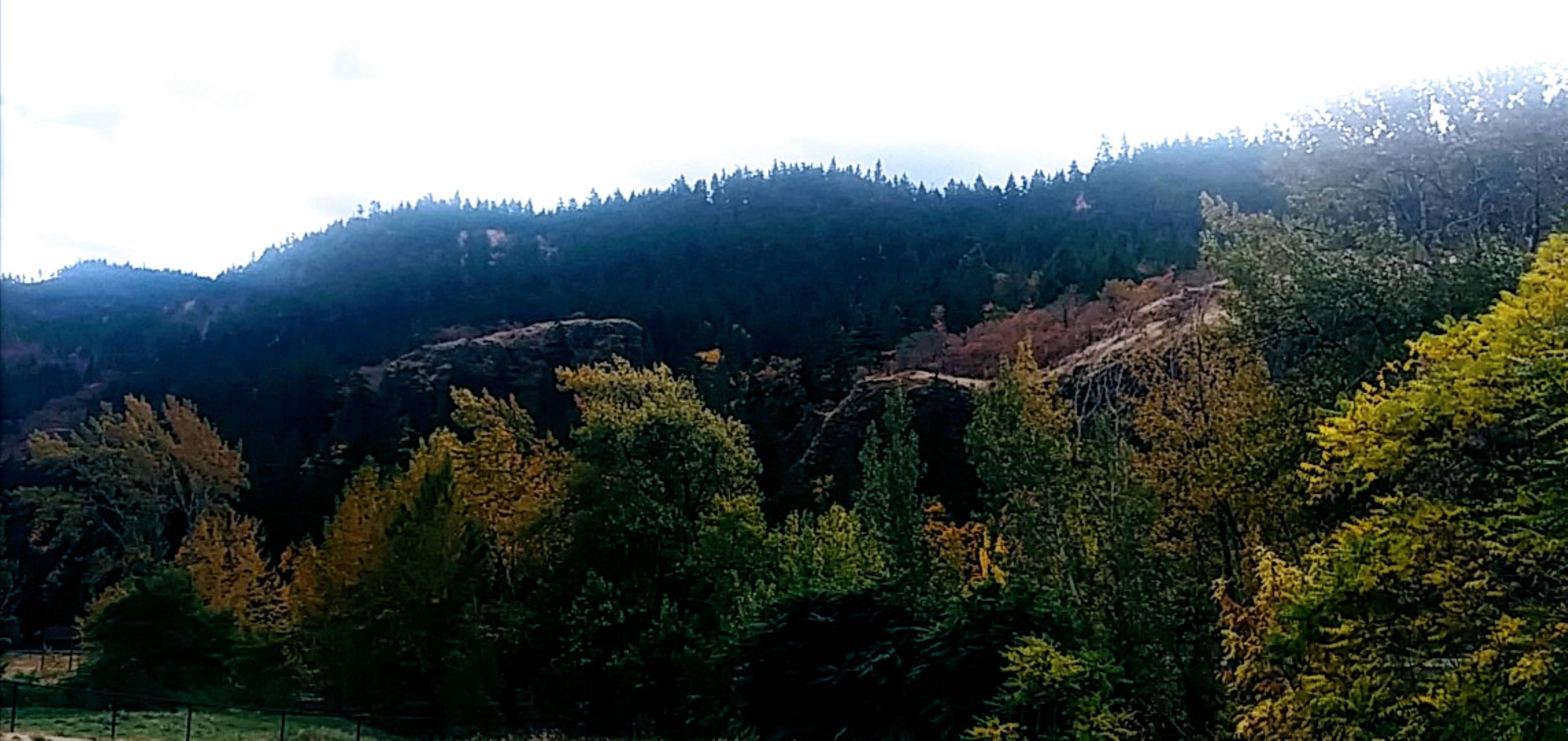 Cowlitz County Hills