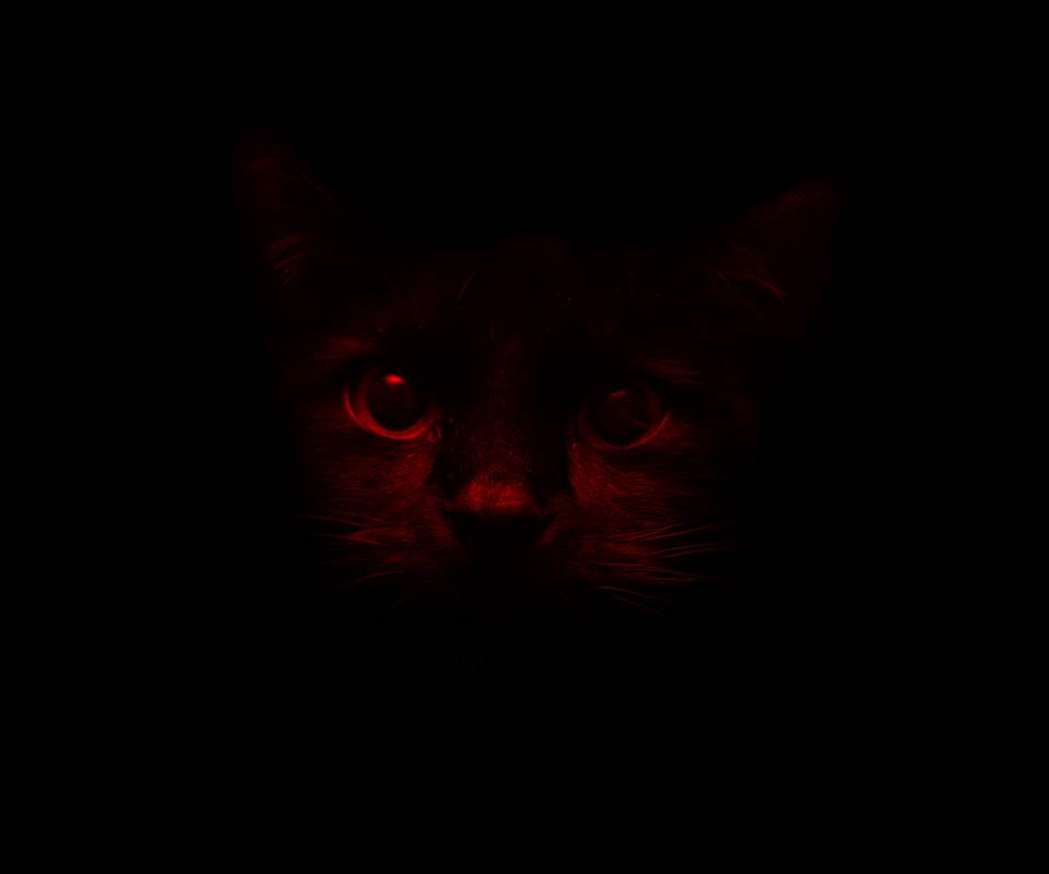 Dark Cat Wallpaper By Zok96 B2 Free On Zedge