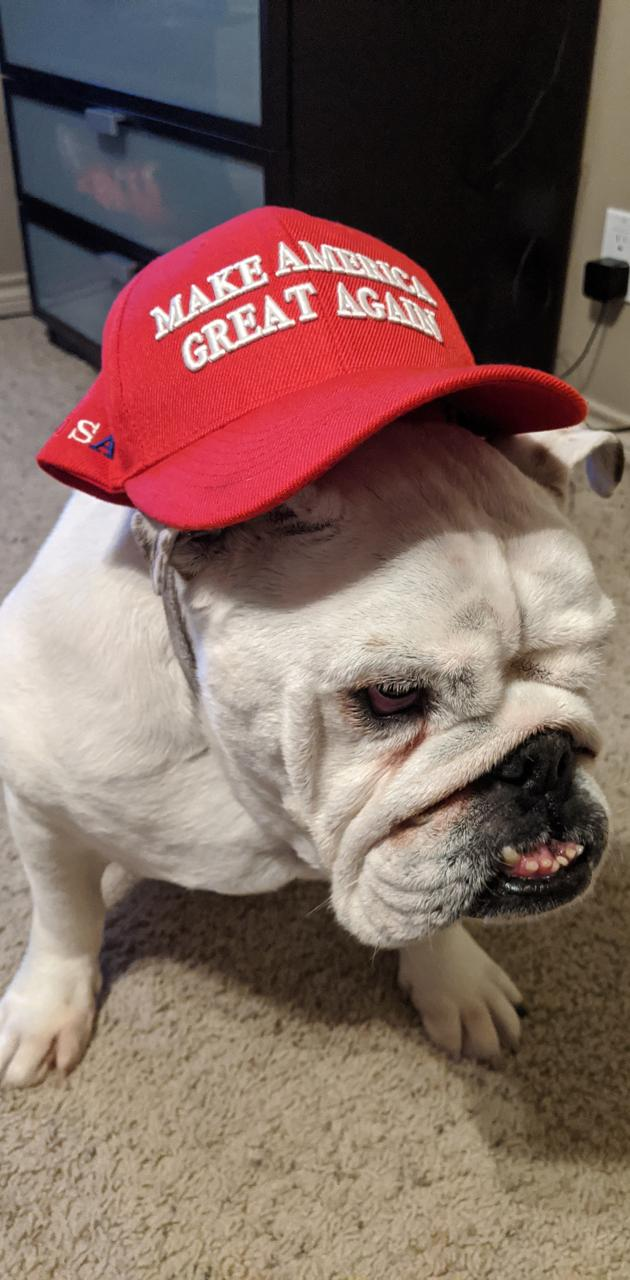 Democratic dog