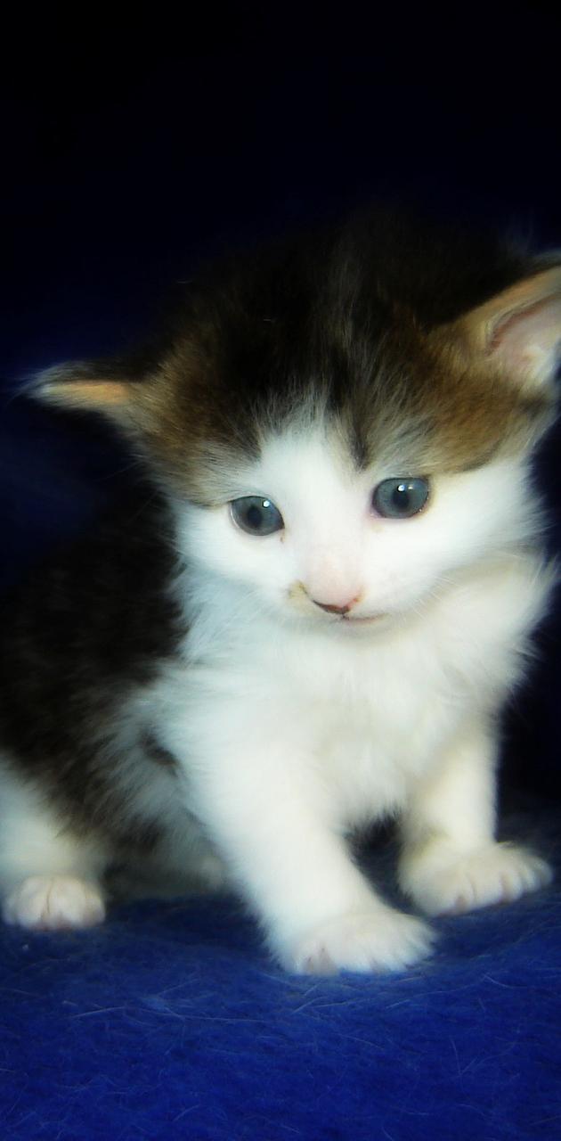 Kitten Willow