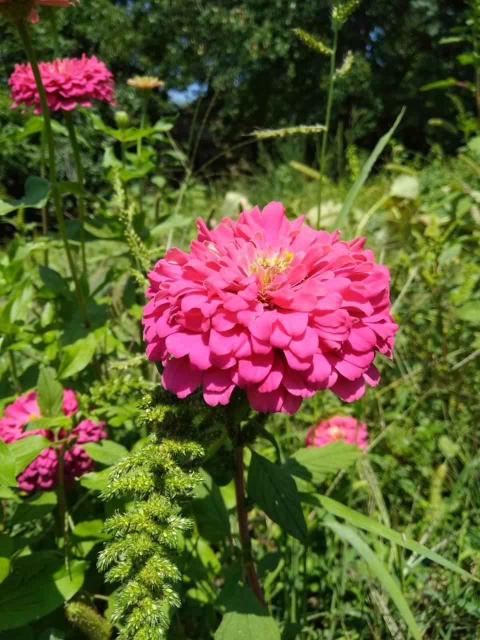 Cicek bahcesi flower