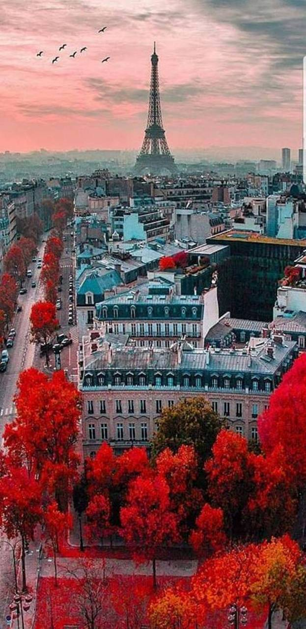 Paris In Autumn Wallpaper By Xhani Rm D7 Free On Zedge