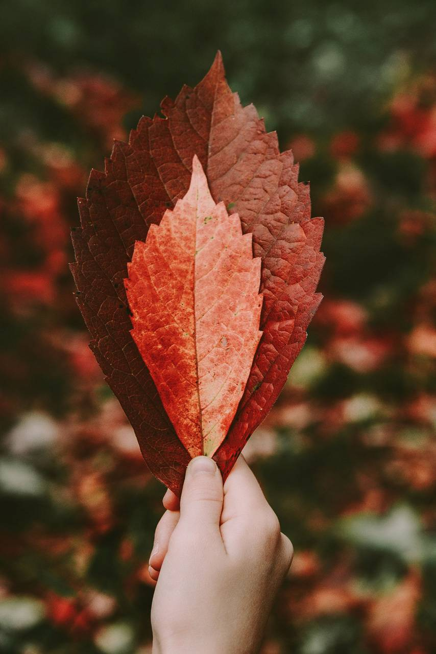 Autumn  Grip