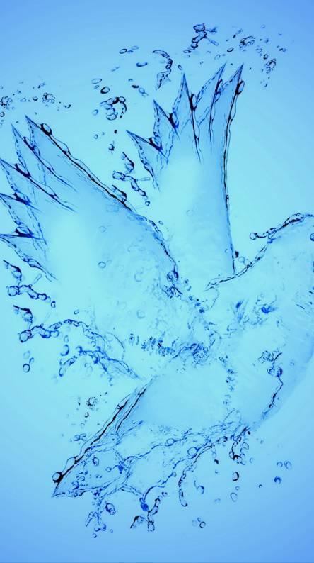 Aqua Dove