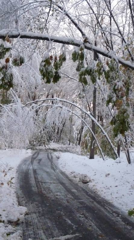 Ice Cover Trees