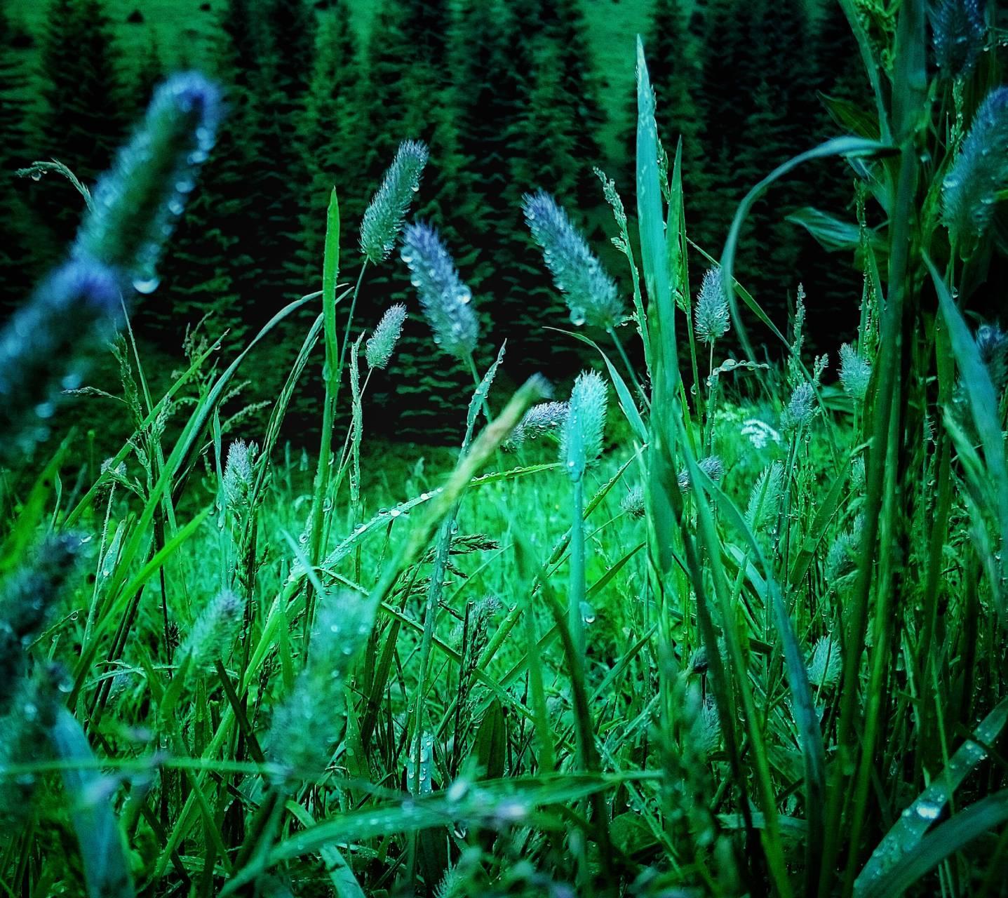 Dew on grass Boga