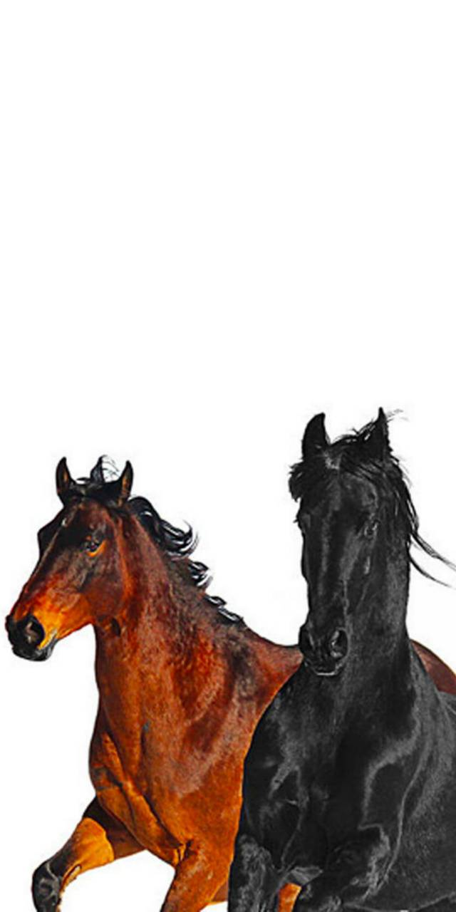 Old town road horses