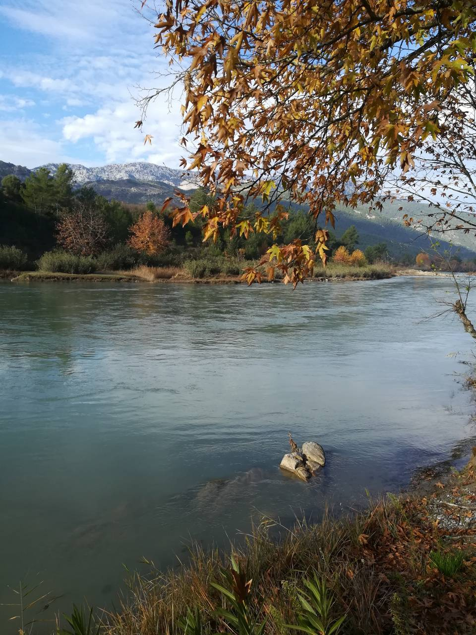 Nehir nature