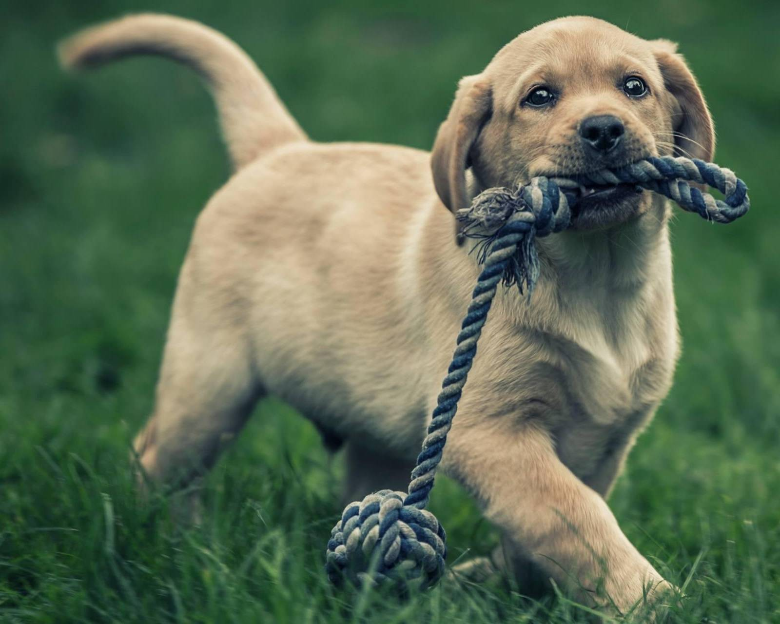 Its Knot play time