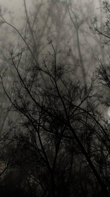 Trees-Dark-Night