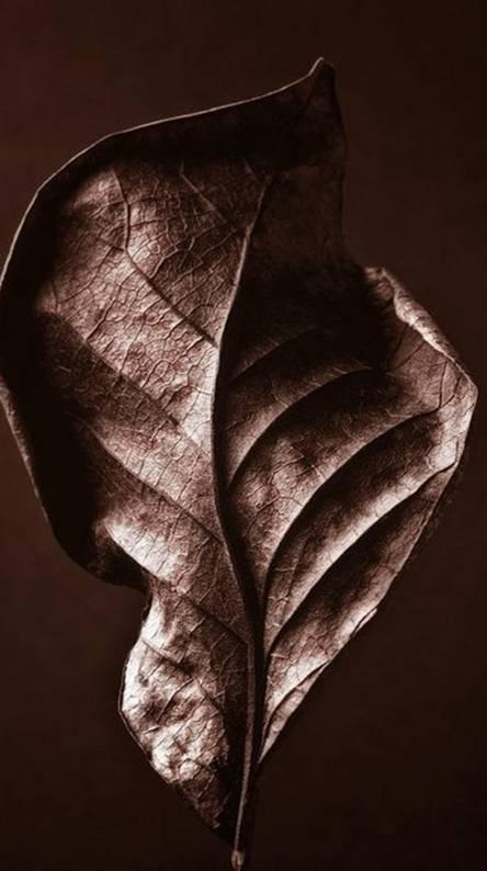 Braun Leaf