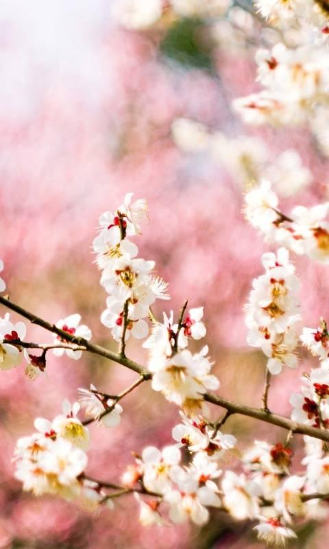 spring blosam