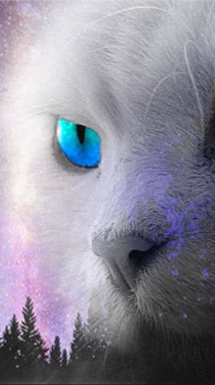Blue Eyes Kaiba White Cat