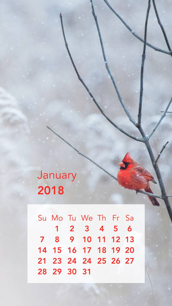 Red Birdie Calendar