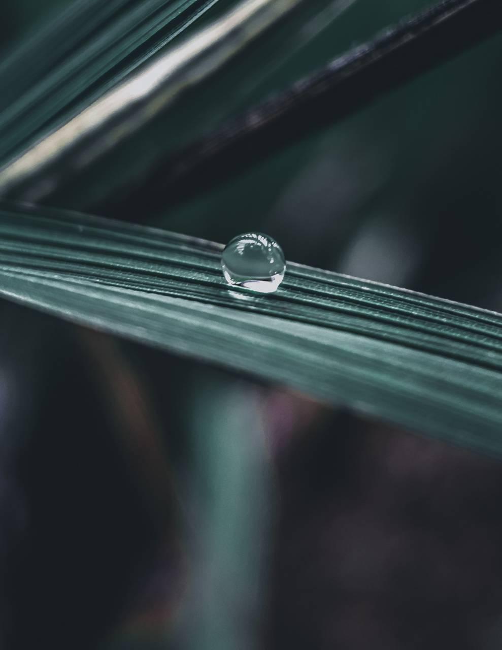 Watter Drop