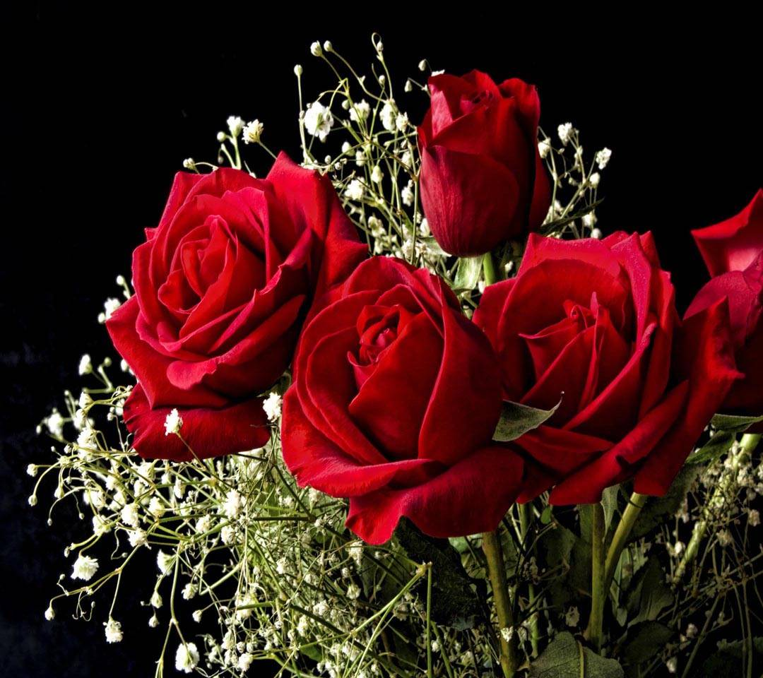 Roses red flowers