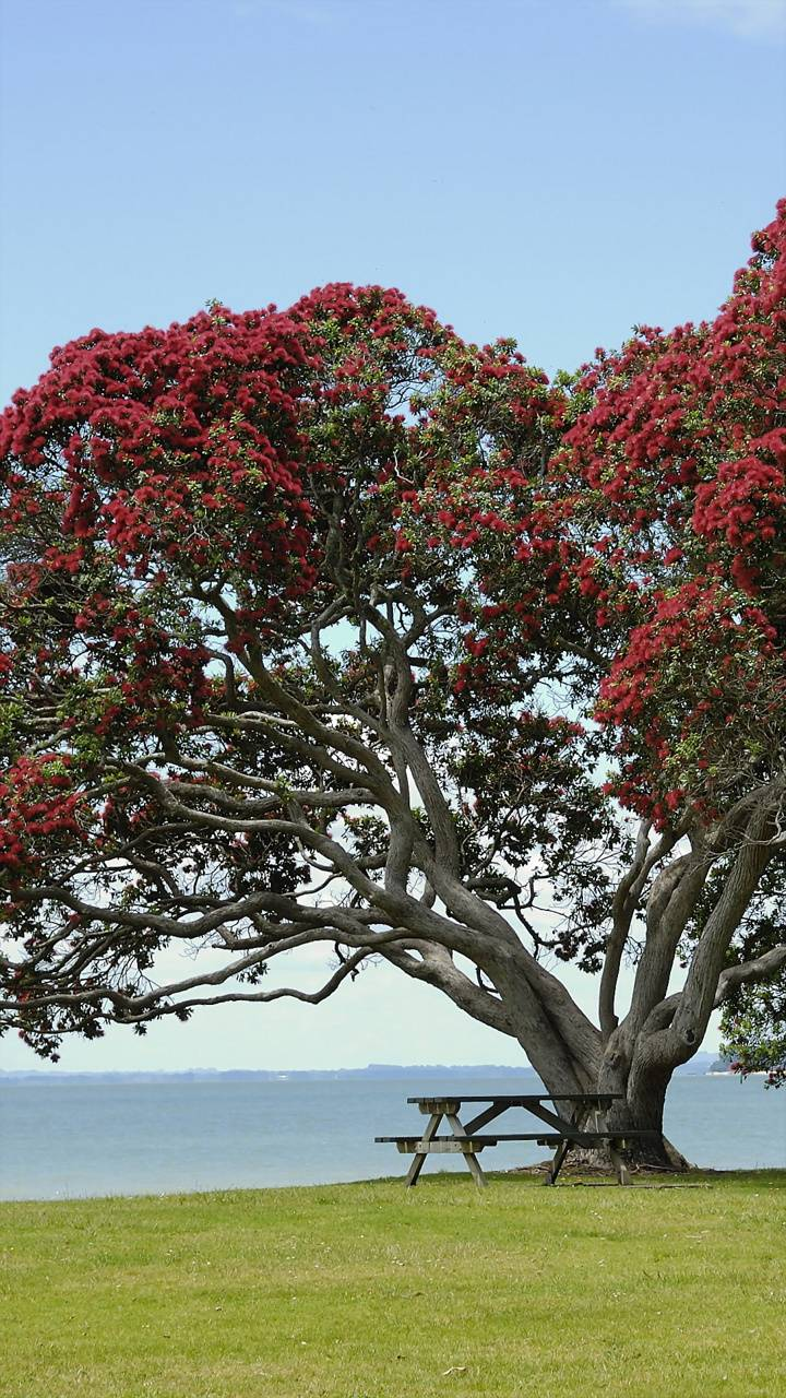 Red Flowers Tree