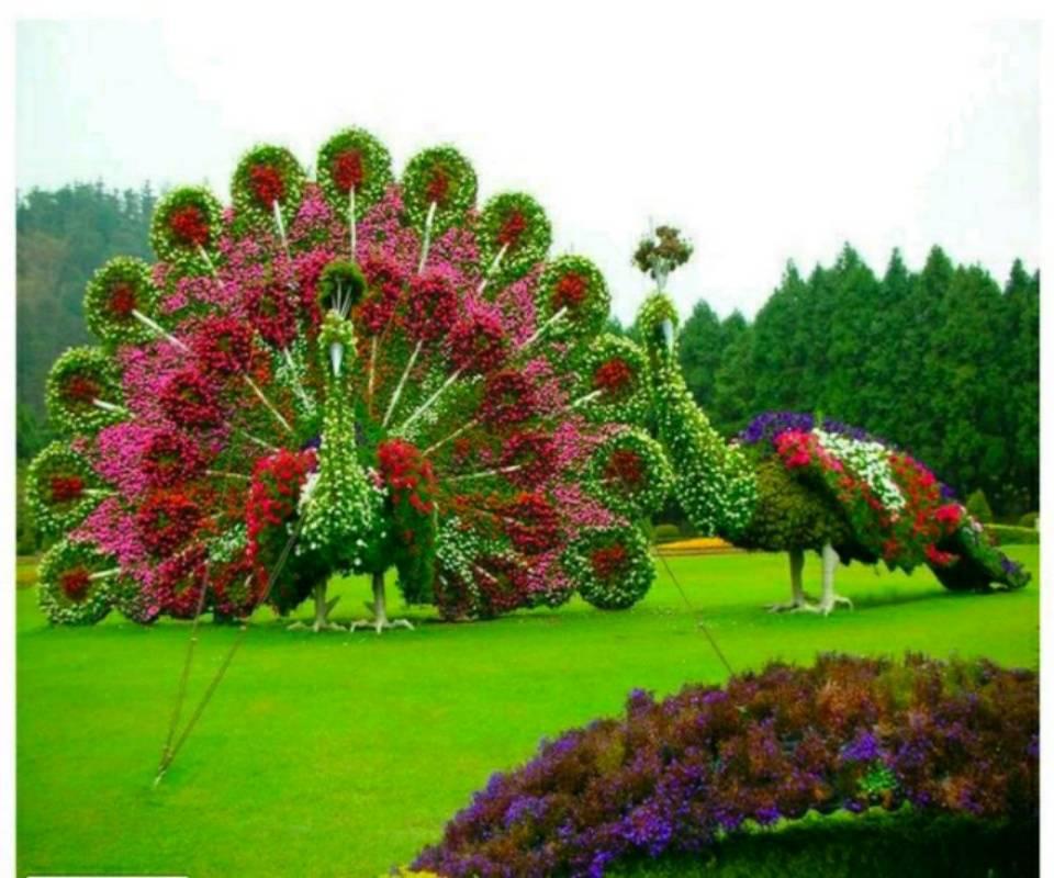 Flower Art peacock