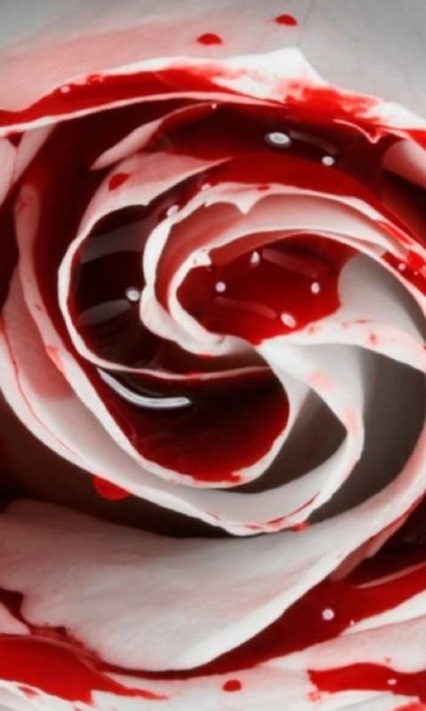 Bloddy Rose