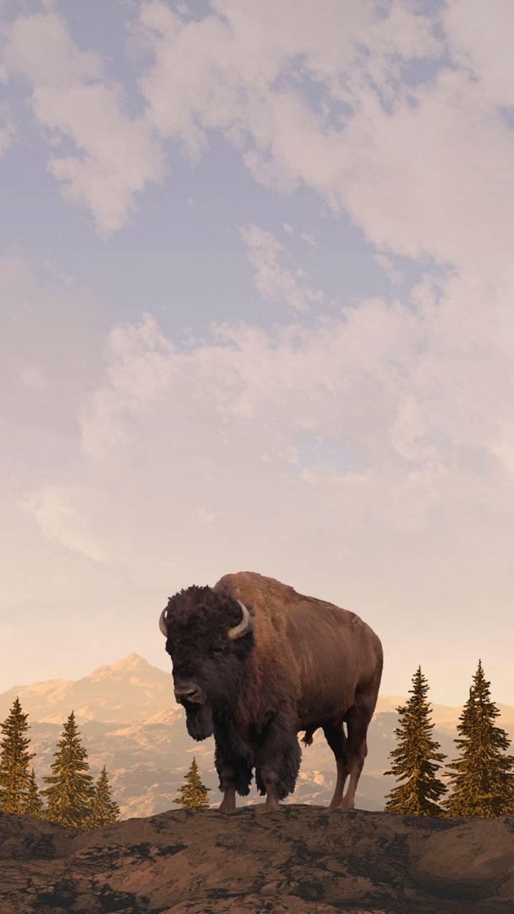 Scottish Bison