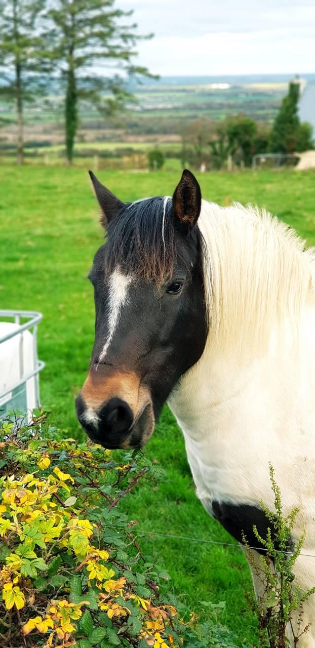 4K Horse 2019