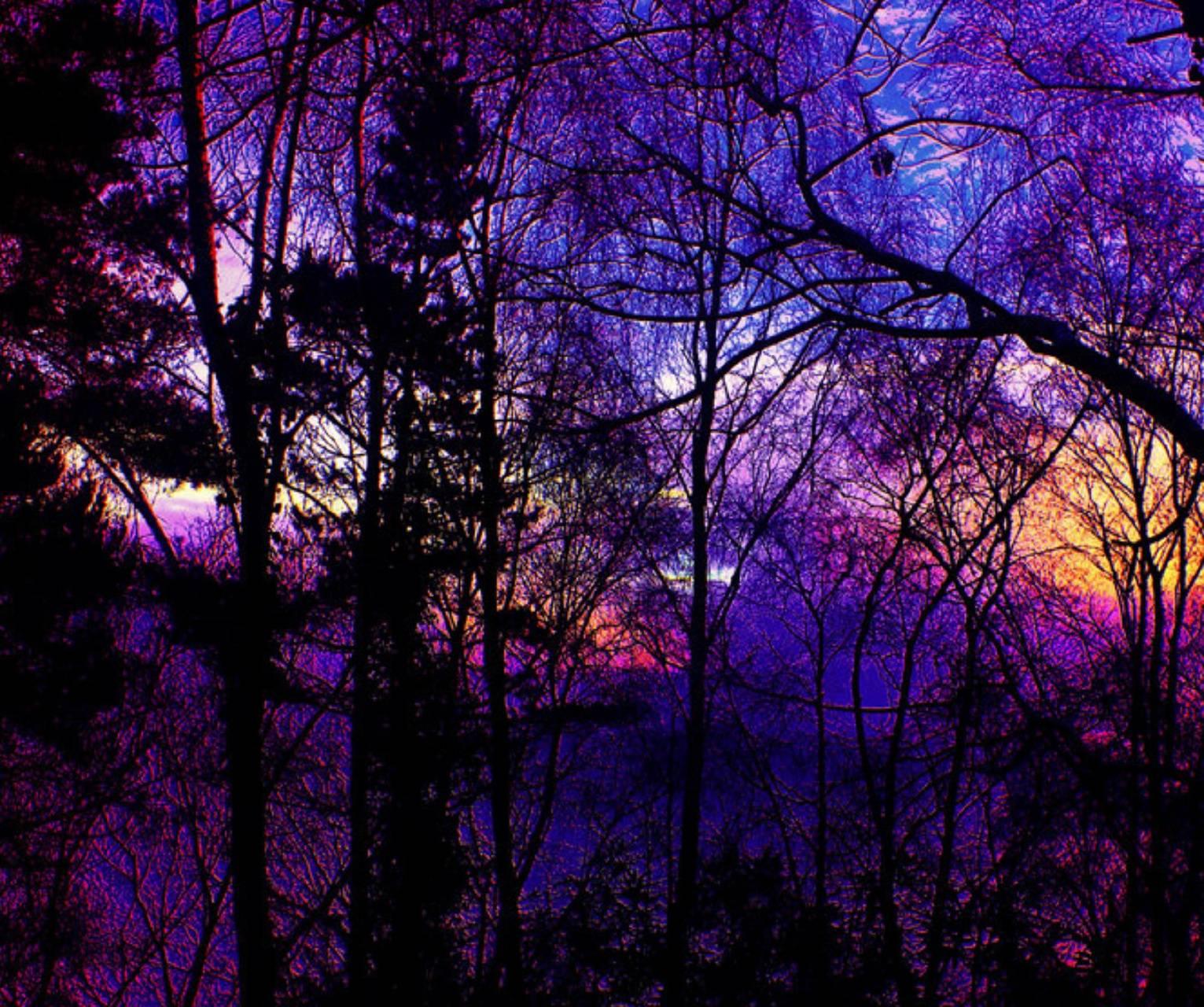 Лес фиолетовый картинки