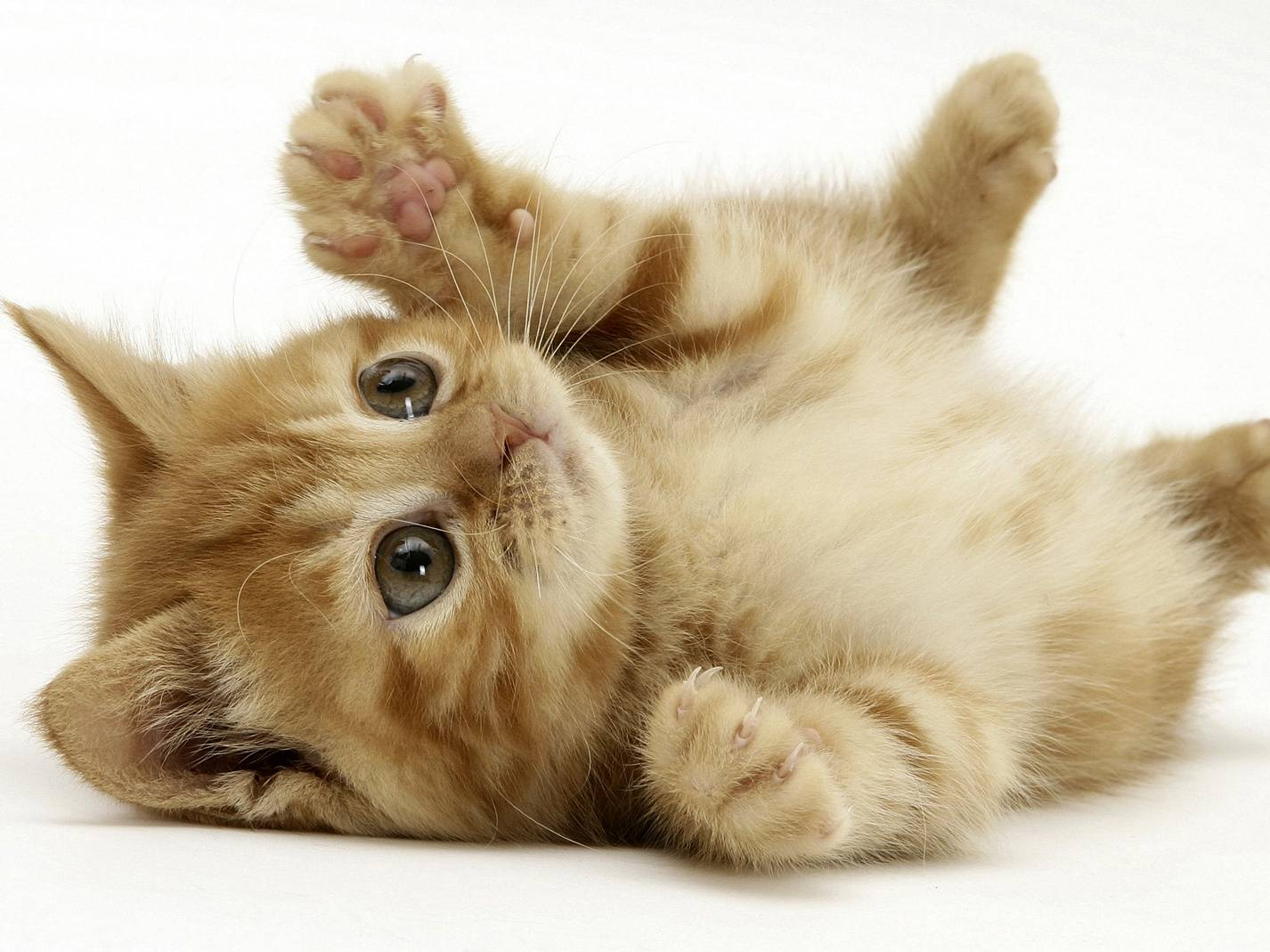 Vz Kitty