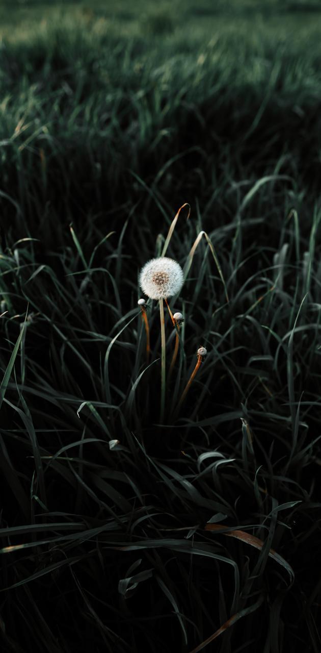 Blow Flower