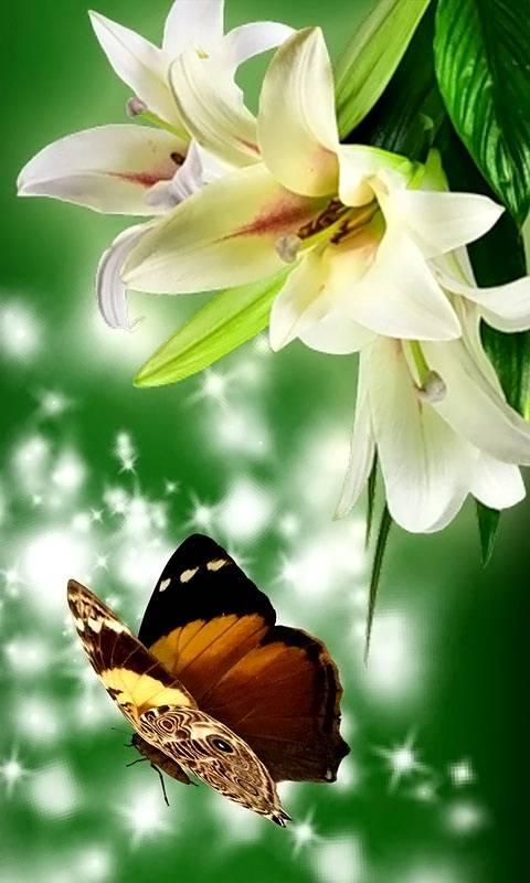 Lilies Butterflies