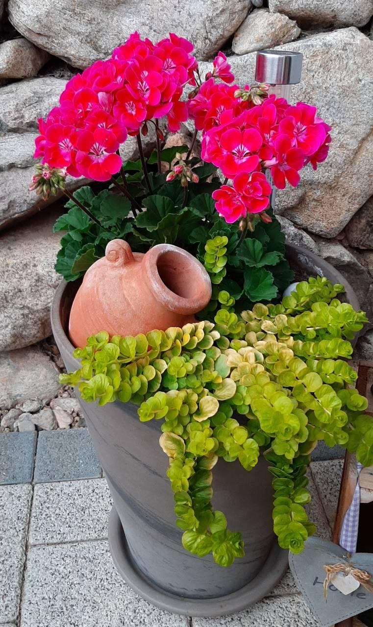 House Door Plants