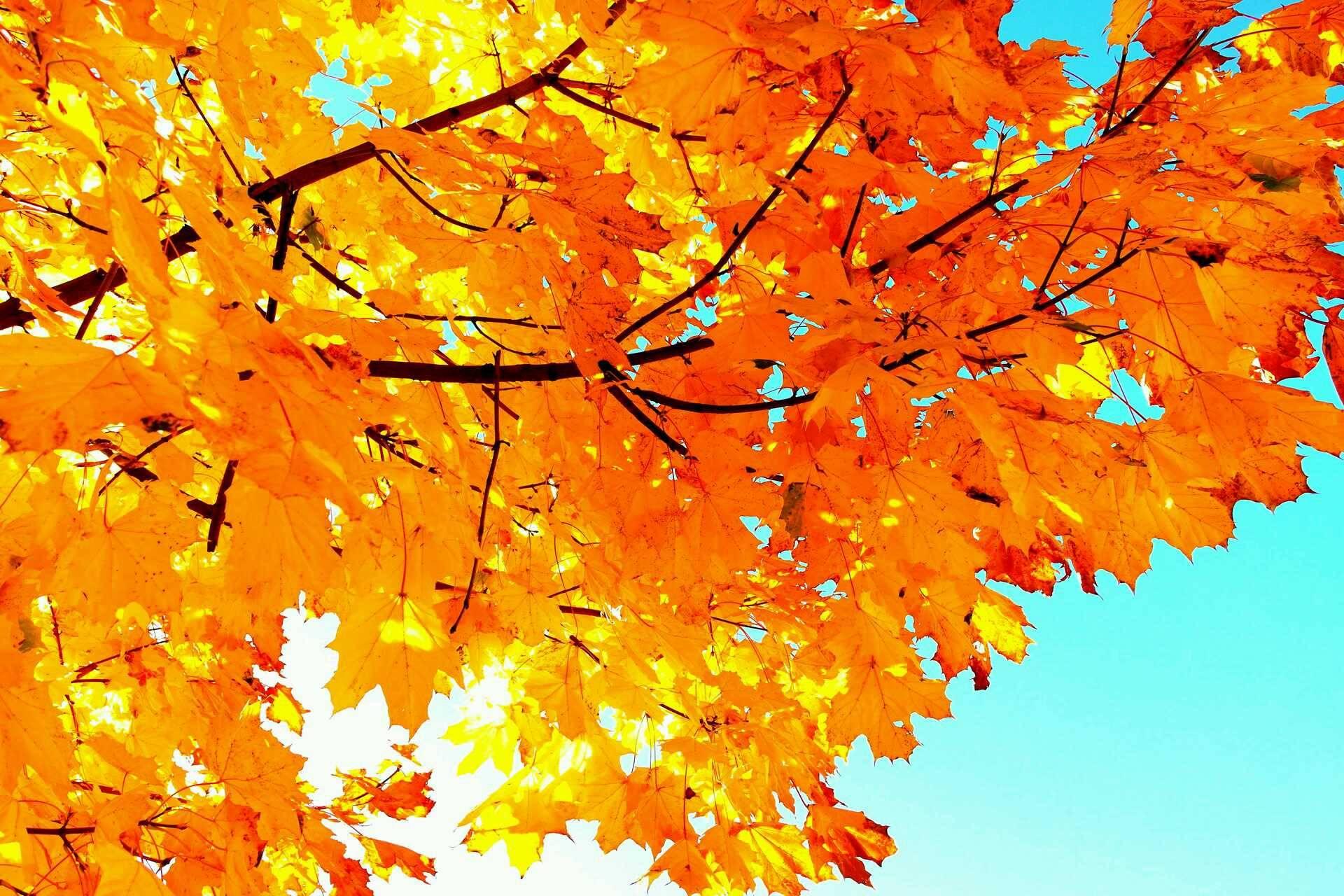 Пошли, осень пришла картинки