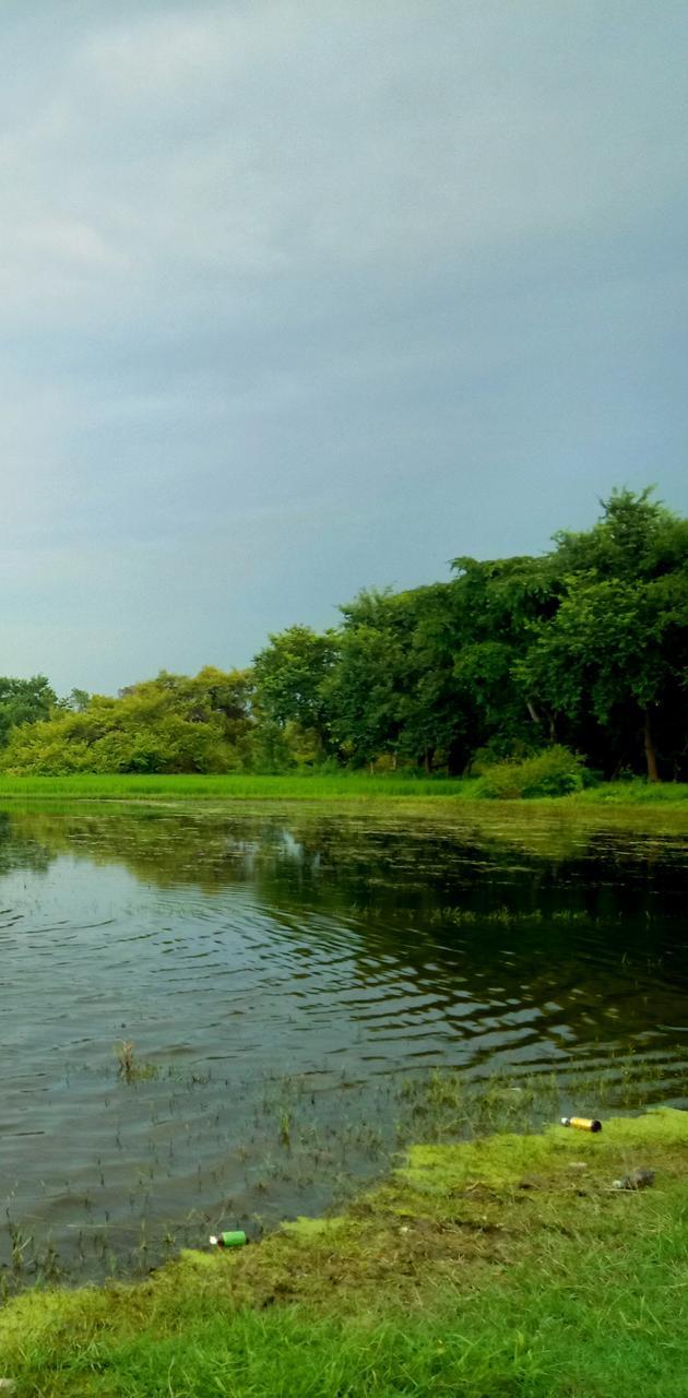 Greenery Lake