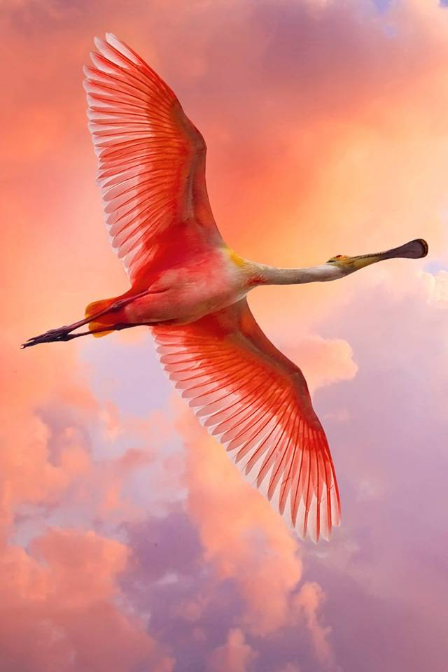 Free Flying Flamingo
