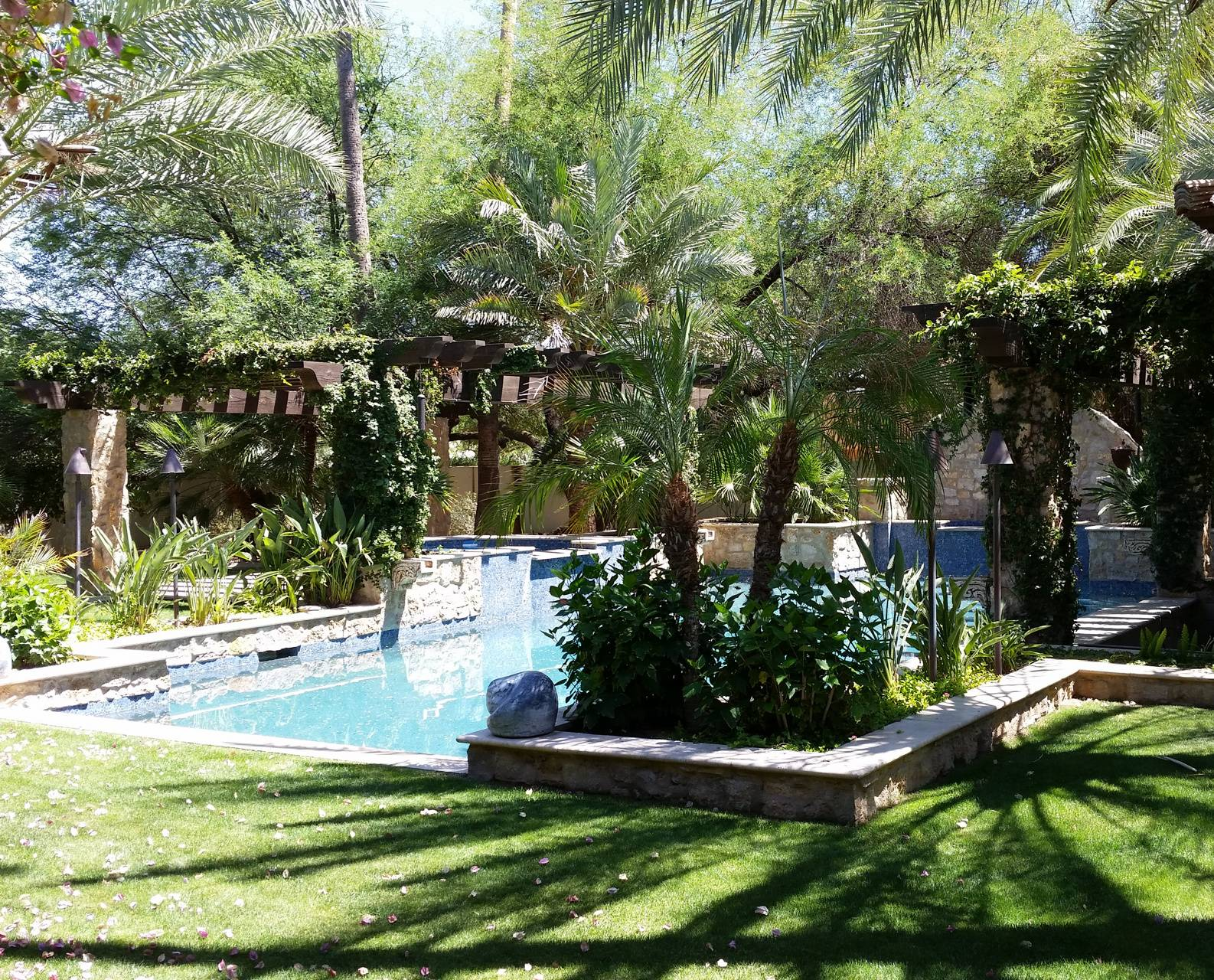 Lush Backyard Pool 1