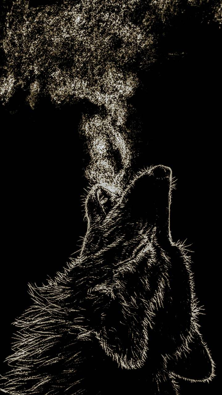 Shadow Wolf Wallpaper By Enc04og 91 Free On Zedge