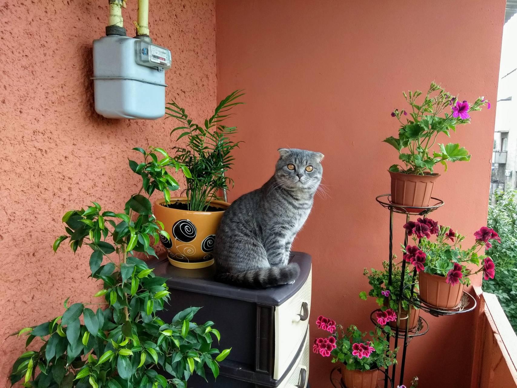 Gyuszi-cica