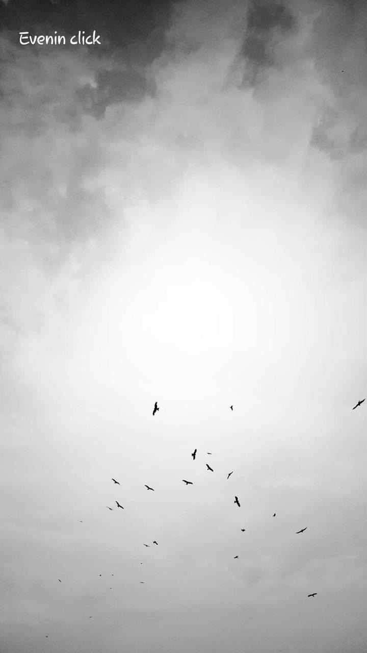 Sky birds