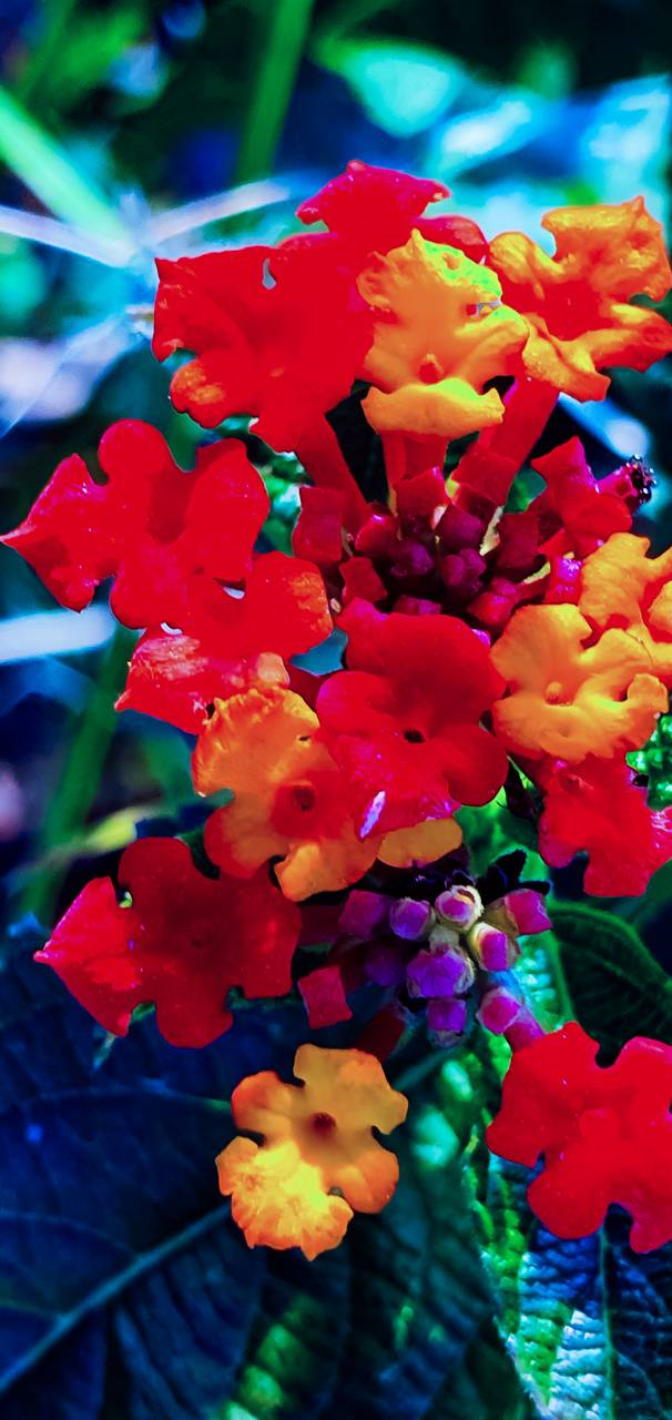 colourful flowers
