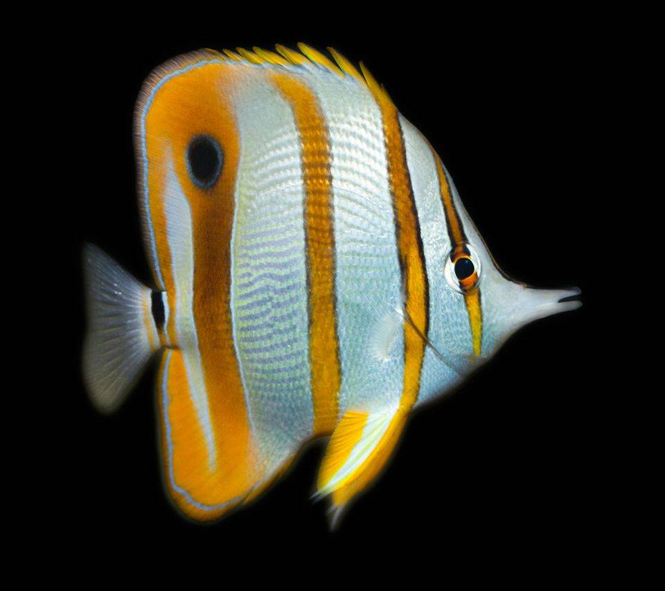 Fish Wall