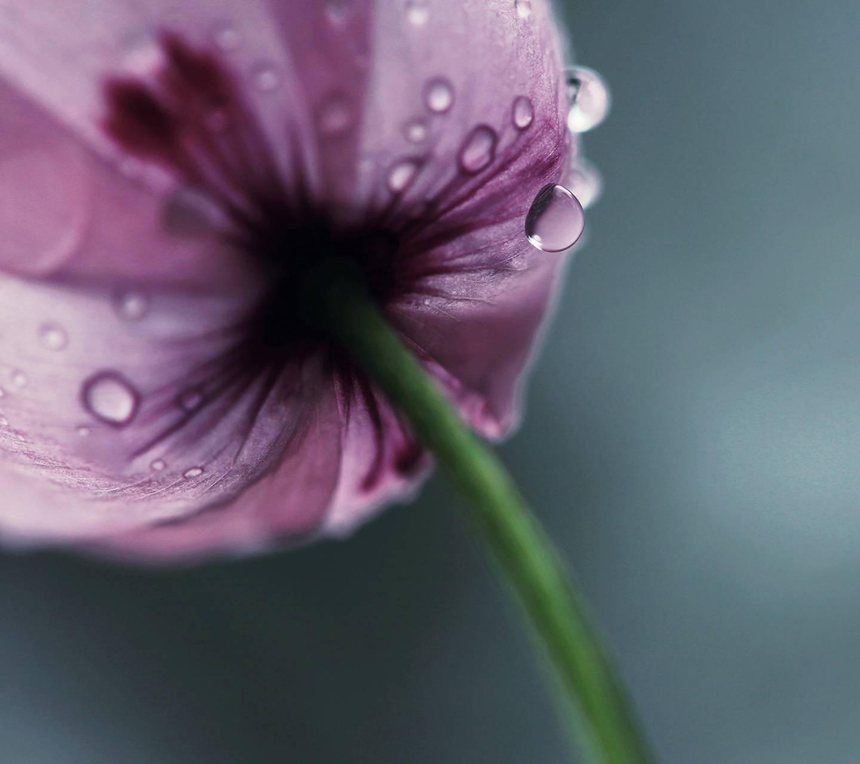 Droplet Macro